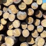Krádež dřeva u Kunčiny Vsi
