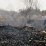 Požár lesa u Lomničky