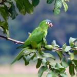 Záchrana papouška v Březině