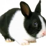 Zloděj králíků dopaden